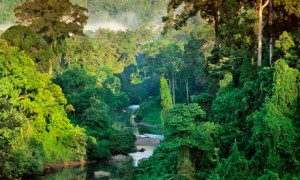 Rainforest-Borneo-006